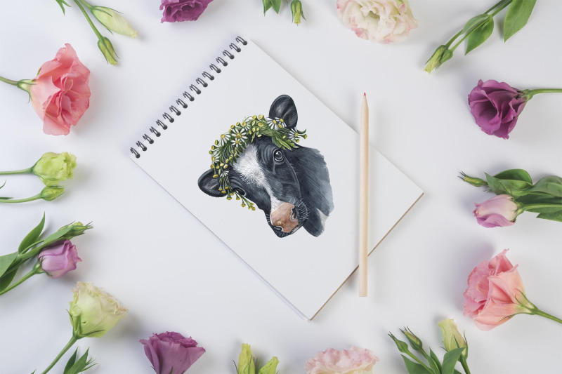 watercolor-set-cute-cow-and-ox-illustrations-8-cows