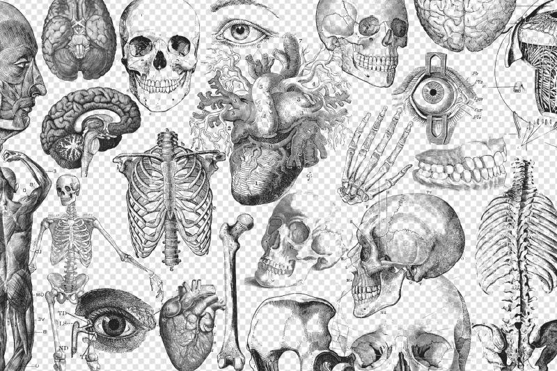 antique-anatomy-overlays-set-2