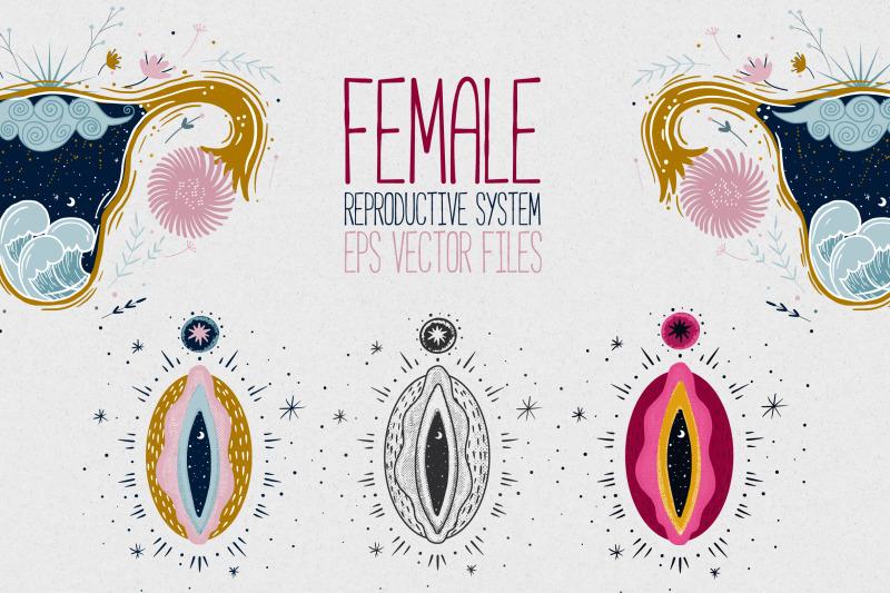 female-reproductive-system-vagina