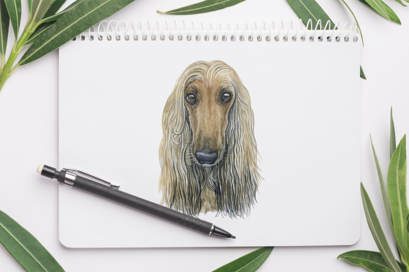 watercolor-dog-illustrations-cute-20-dogs-dog-breeds-part-4
