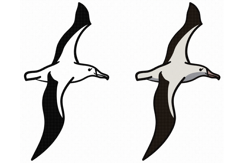albatross-svg-png-dxf-clipart-eps-vector
