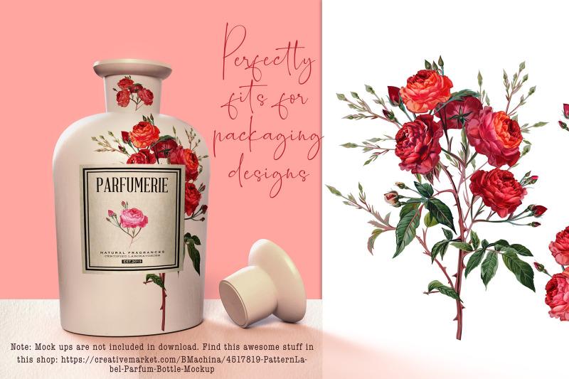 pink-rose-vector-clipart-set