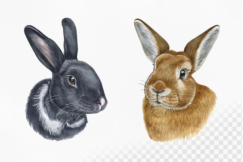 watercolor-set-cute-animal-illustrations-8-bunny-and-rabbit