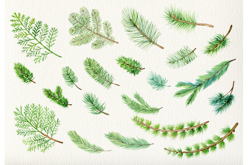 watercolor-pine-branches-forest-clipart-winter-woodland-clip-art