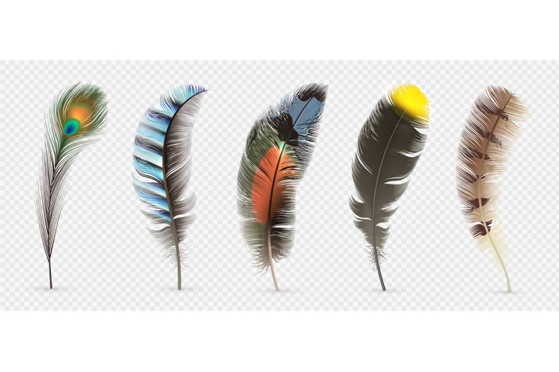 realistic-bird-feathers-detailed-colorful-feather-of-different-birds