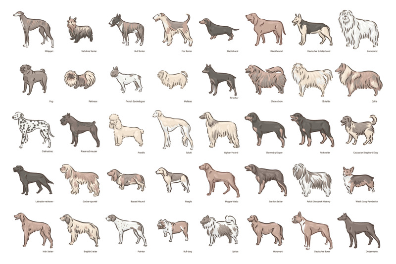 dog-breeds-illustrations-set