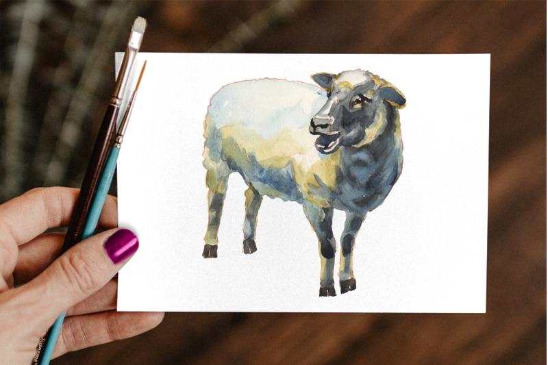 sheep-amp-lambs-watercolor-set