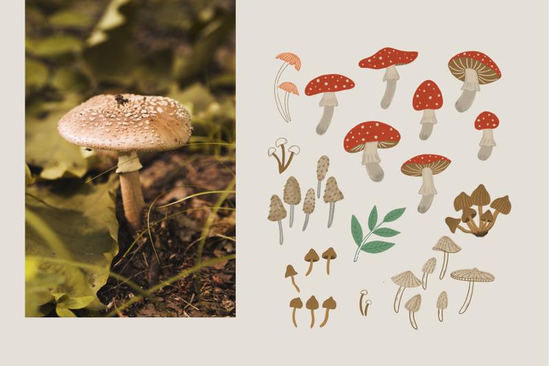 mushroom-pattern-collection