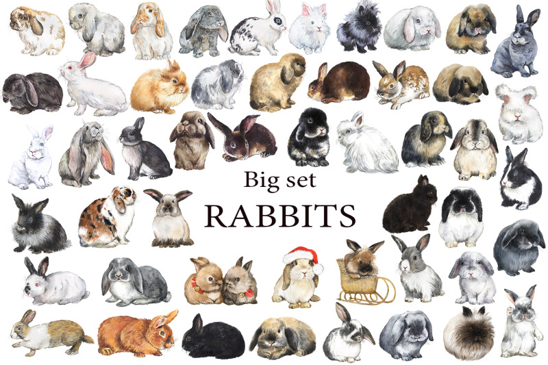 large-set-of-rabbits-watercolor-clipart-with-decorative-breeds-of-rab
