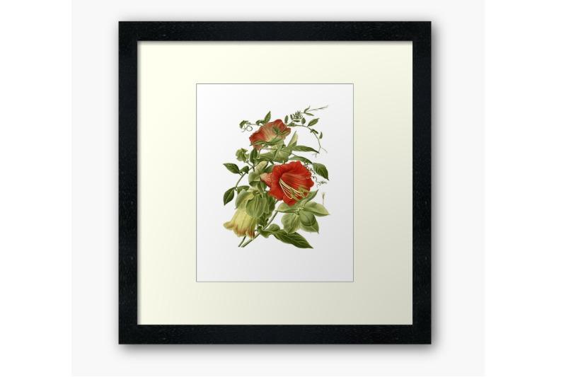 vintage-botanical-flowers-transparent-png