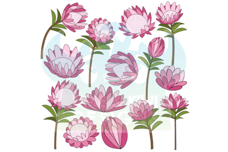 protea-flowers-clipart-lime-and-kiwi-designs
