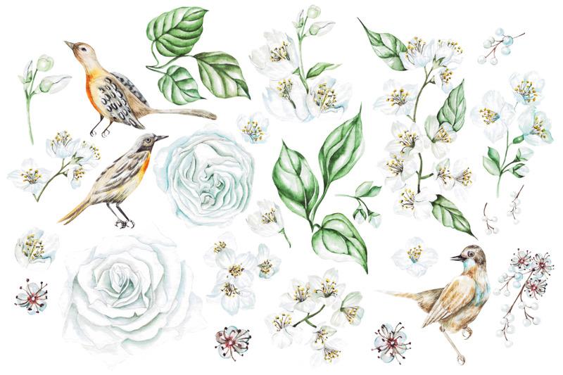 watercolor-jasmine-amp-roses