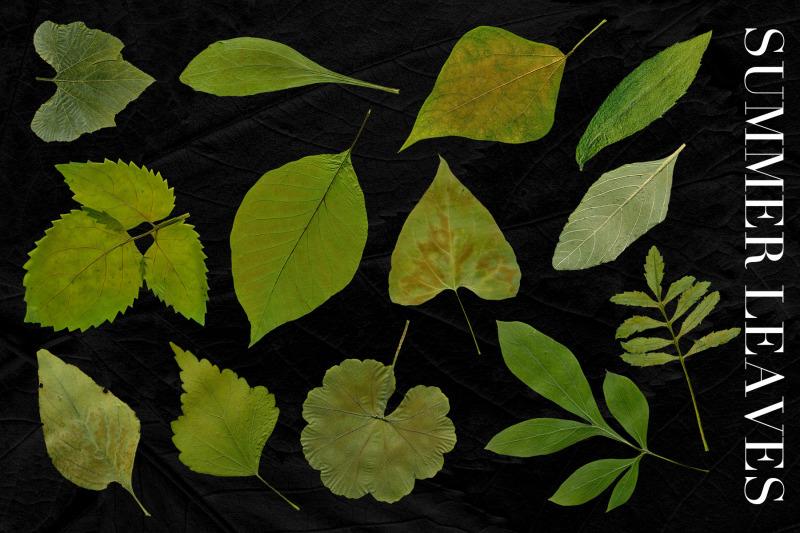 fall-leaves-elements-amp-backgrounds-bundle