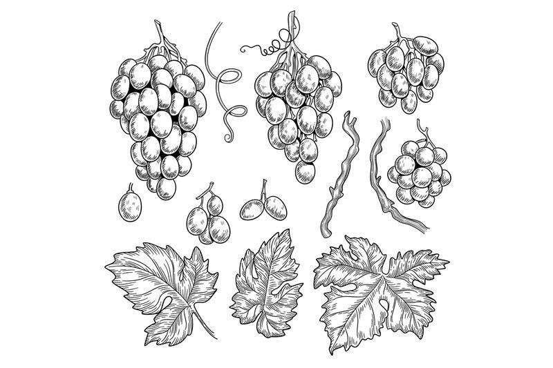 grape-doodle-wine-symbols-for-restaurant-menu-graphics-engraving-grap