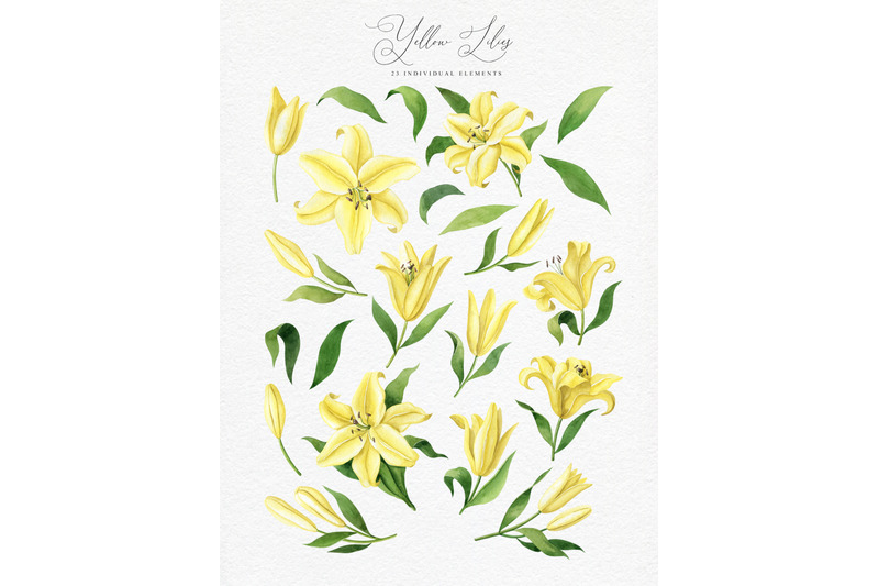 yellow-lilies-watercolor-collection