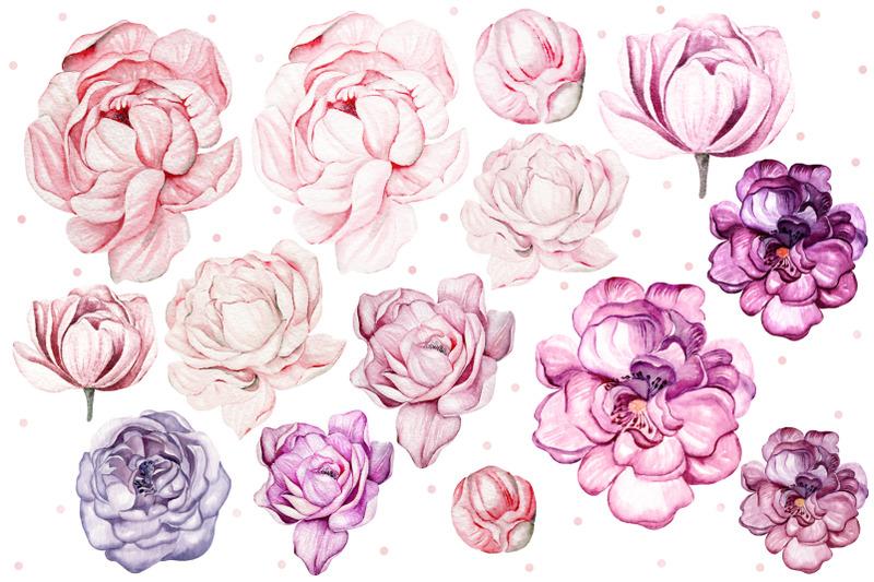 watercolor-tender-peony