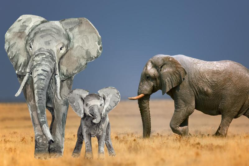big-animal-clip-art-bundle