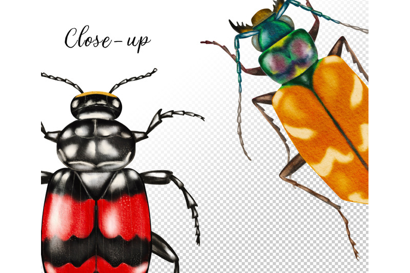 watercolor-beetles-clipart-bug-insects-bug-catching-beetles-png