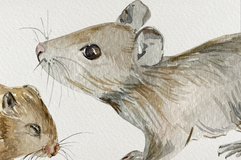 watercolor-mother-and-baby-mouse-clip-art