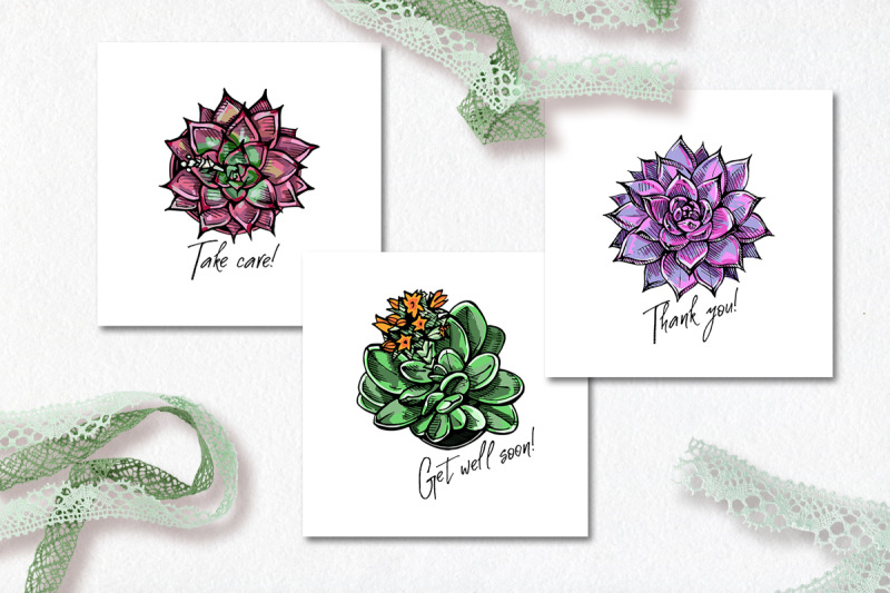 succulents-patterns-and-cards-ai-eps-svg-jpeg-png-psd