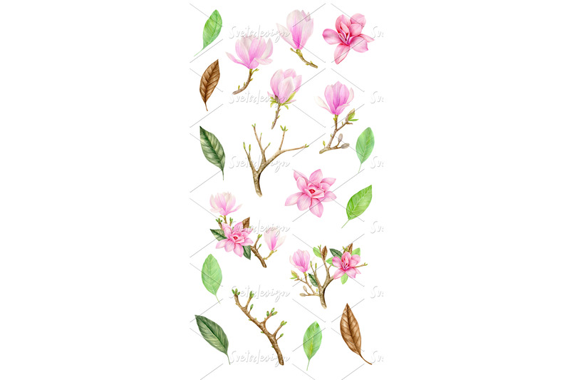 watercolor-pink-magnolia-floral-clipart-set-spring-flowers-leaves-png