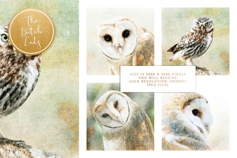 digital-paintings-the-owl