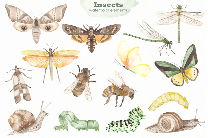 insects-watercolor-collection
