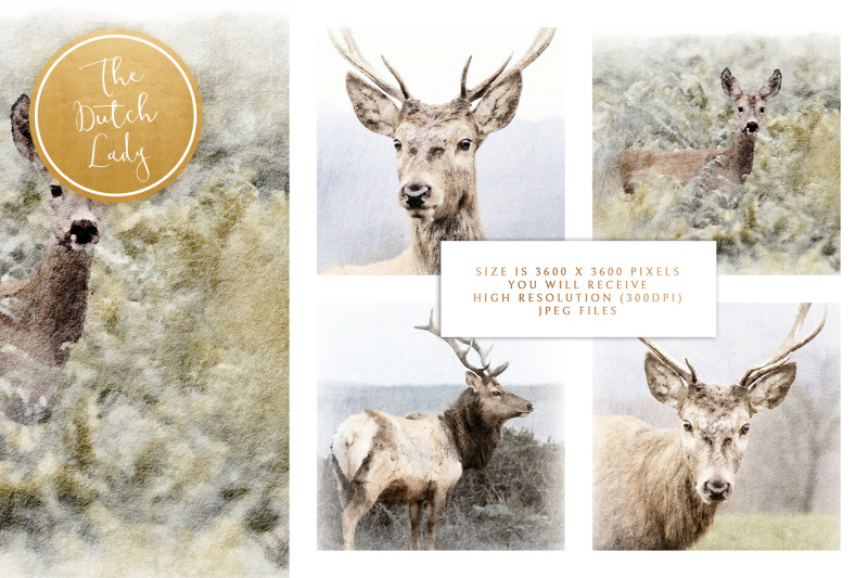 digital-paintings-the-deer