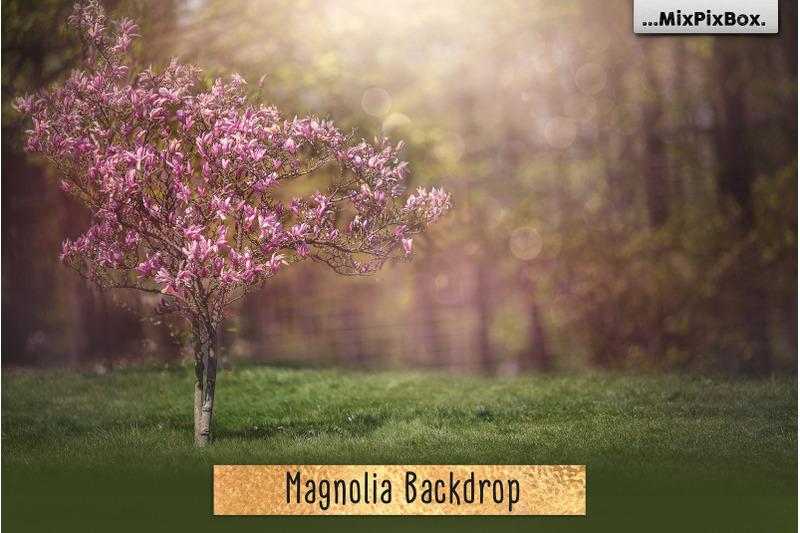 magnolia-backdrop