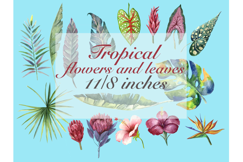 tropical-birds-and-tropical-plants