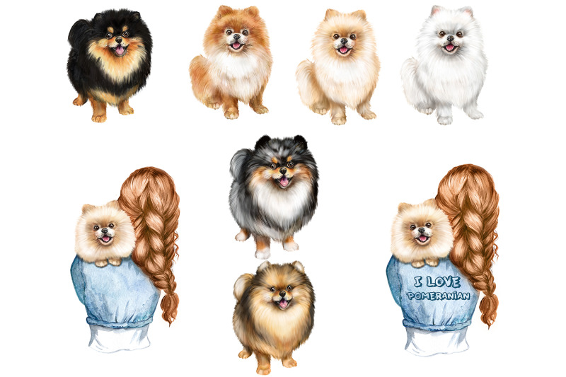 cute-pomeranian-spitz-watercolor-clipart-gift-for-dog-lovers-png