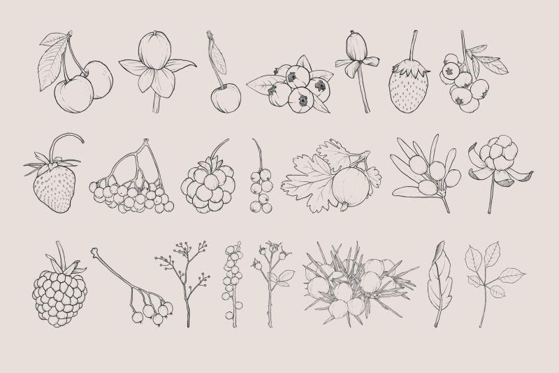 berries-procreate-stamp-brushes