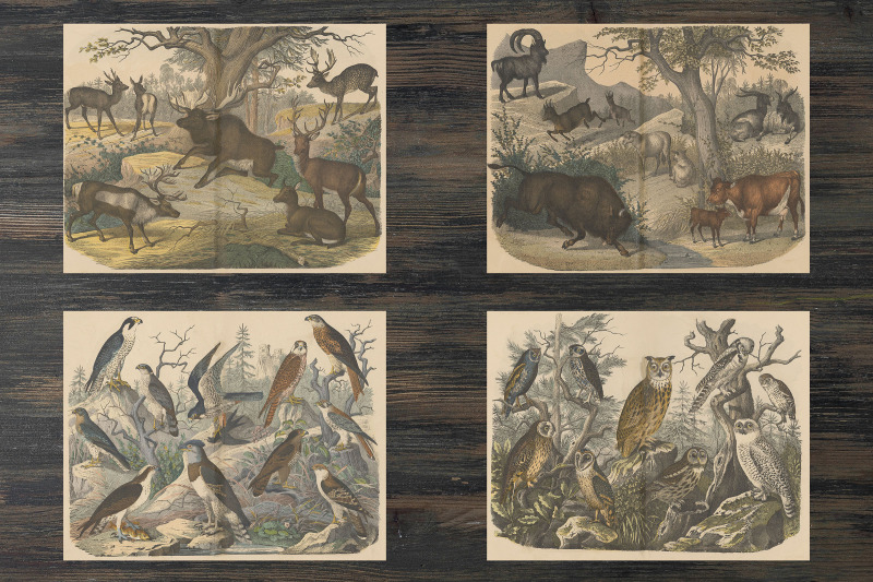 vintage-animals-ephemera-classics