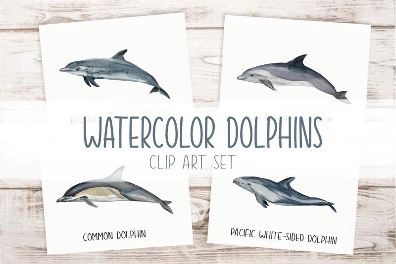 dolphins-watercolor-clip-art-amp-print