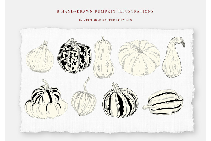 pumpkins-hand-drawn-illustrations