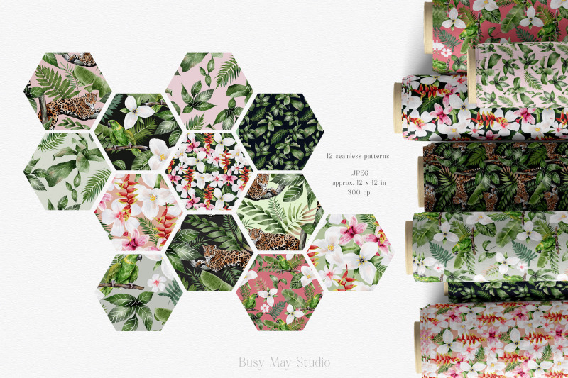 tropical-rainforest-illustrations-collection-and-patterns