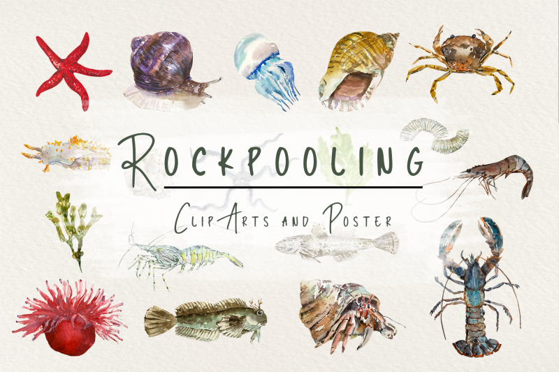 rockpooling-clip-arts-and-poster