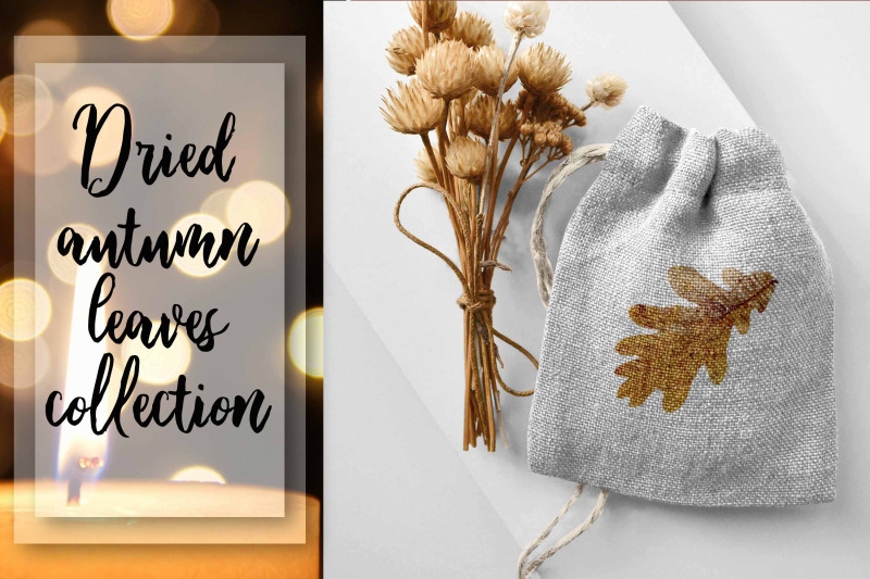 dried-autumn-leaves-collection-png