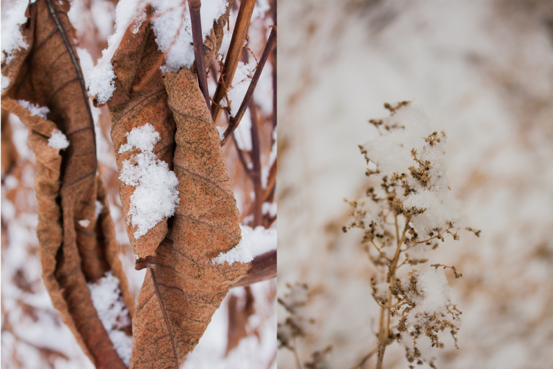winter-photo-collection