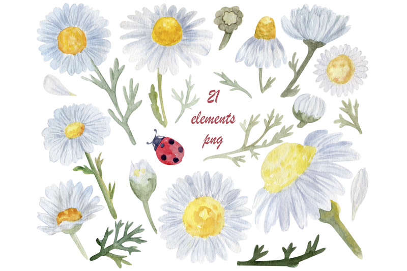 watercolor-flowers-daisy-png-pressed-floral-clipart