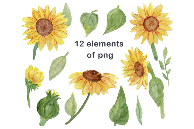 watercolor-floral-sunflower-clipart-png