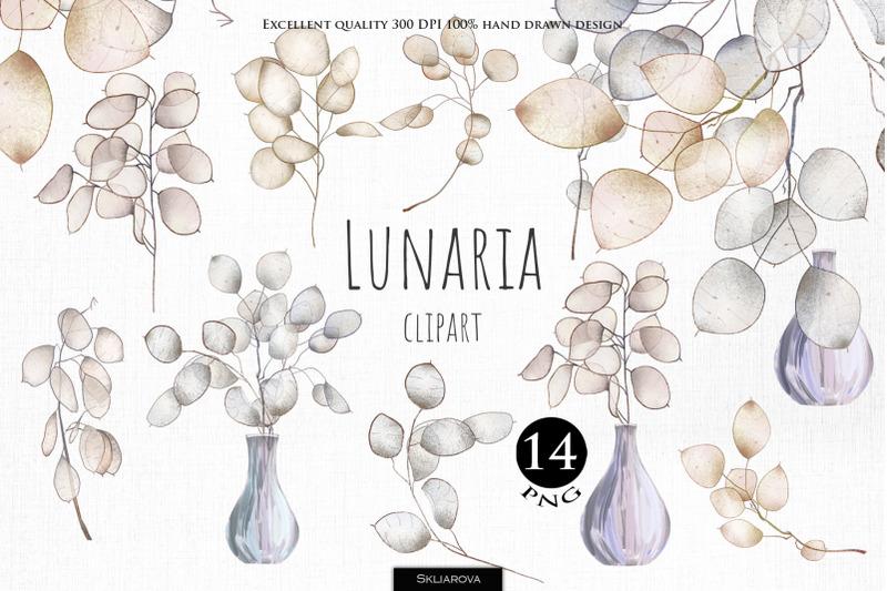 lunaria-plant-clipart