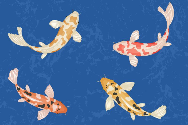 koi-fish-clipart-koi-carps-images