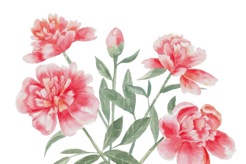 peonies-watercolour-set