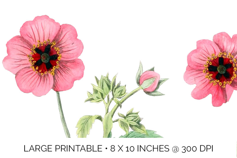 flowers-pink-clipart