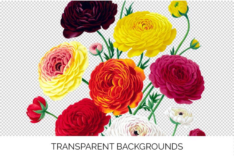 bouquet-ranunculus-clipart