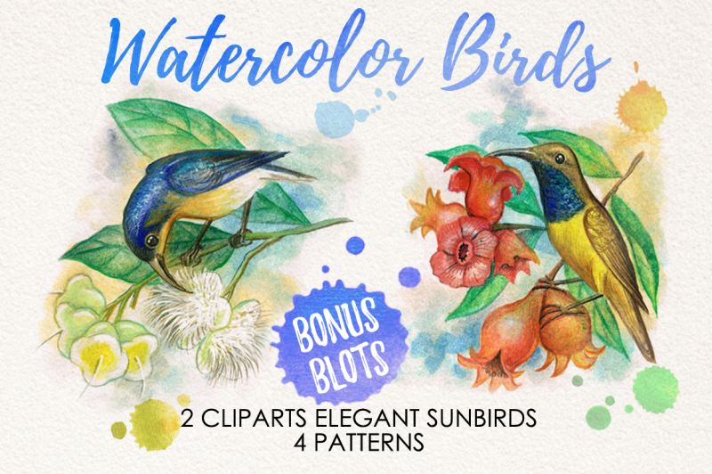 watercolor-birds