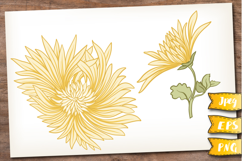 yellow-chrysanthemum-set