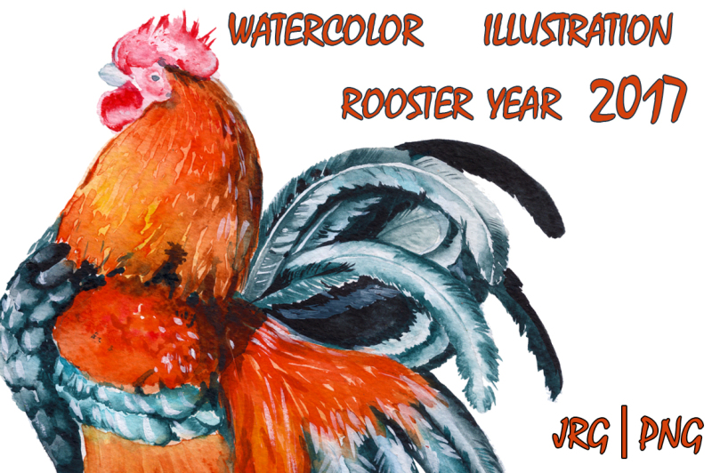 rooster-watercolor-illustration