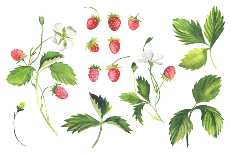 strawberry-wreath-pattern-and-isolated-berries